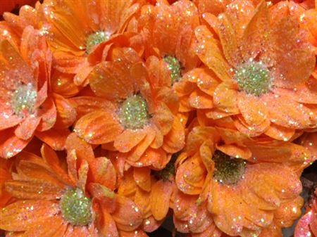 <h4>Chr T Bacardi Orange + Glit</h4>