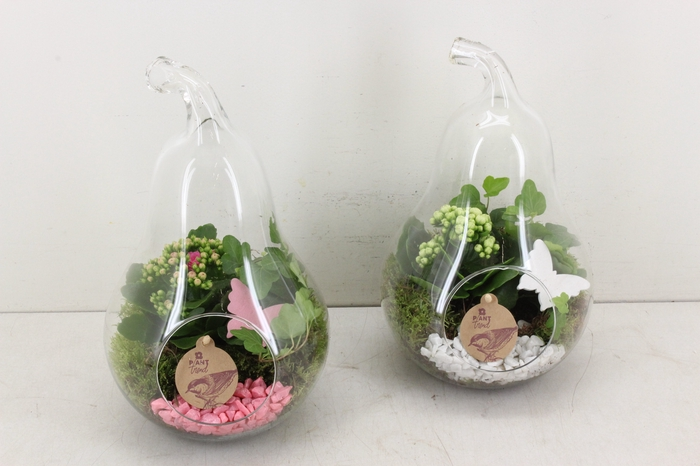 <h4>arr. PL - Glazen peer - roze/wit</h4>