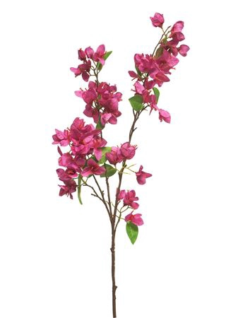 <h4>Bougainvillea spray Naalehu 94cm beauty</h4>