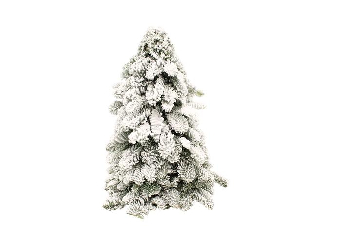 <h4>Kerstboom Nobilis Snow 50</h4>