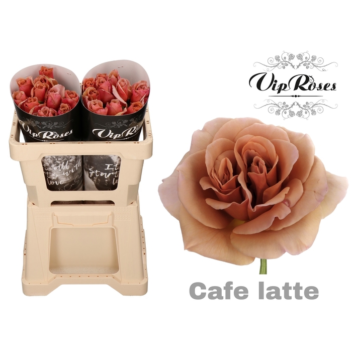<h4>R GR CAFE LATTE x 20</h4>