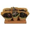 Begonia Beleaf gemengd