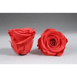 Rose stab. XXL Ora-03