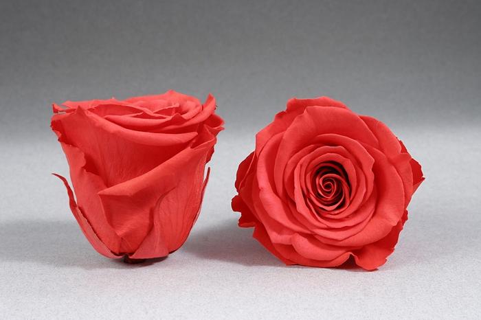 <h4>Rose stab. XXL Ora-03</h4>