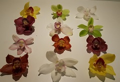 <h4>Cymbidium Mix 5/7 Bl per stem</h4>