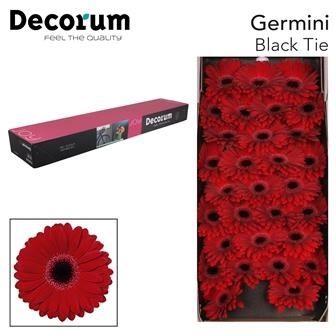 <h4>Germini Black Tie</h4>