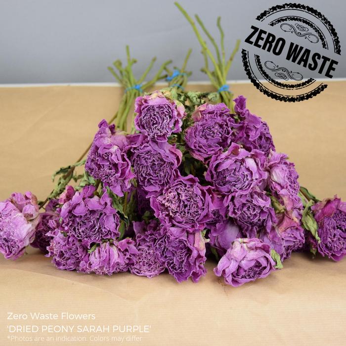 <h4>Dried Peony Sarah Purple</h4>