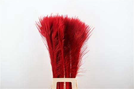 <h4>FEATHER PEACOCK L90-100 RED</h4>