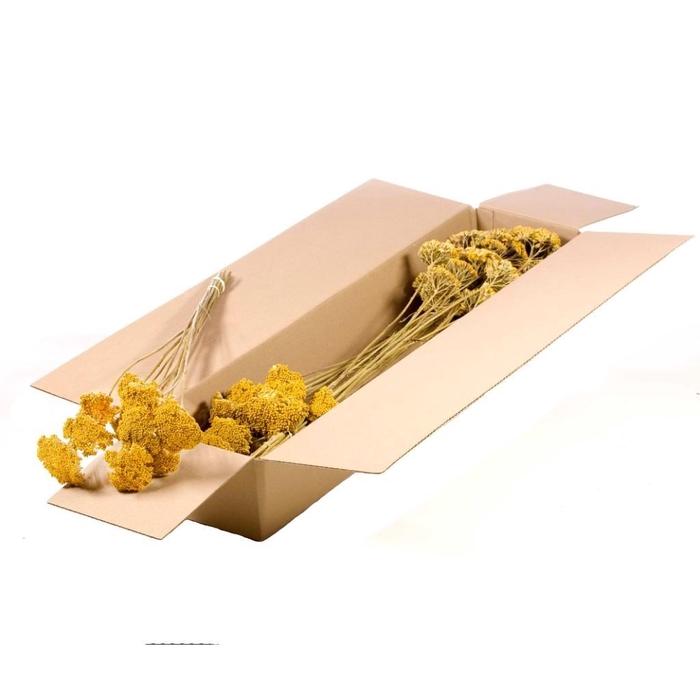 <h4>Achillea parker yellow SB natural</h4>