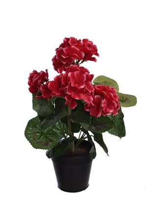 <h4>Flower Geranium h31 pink/green</h4>