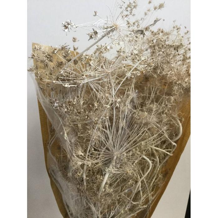 <h4>DRIED FLOWERS - BESBESTWIJGEN MISTY WHITE</h4>