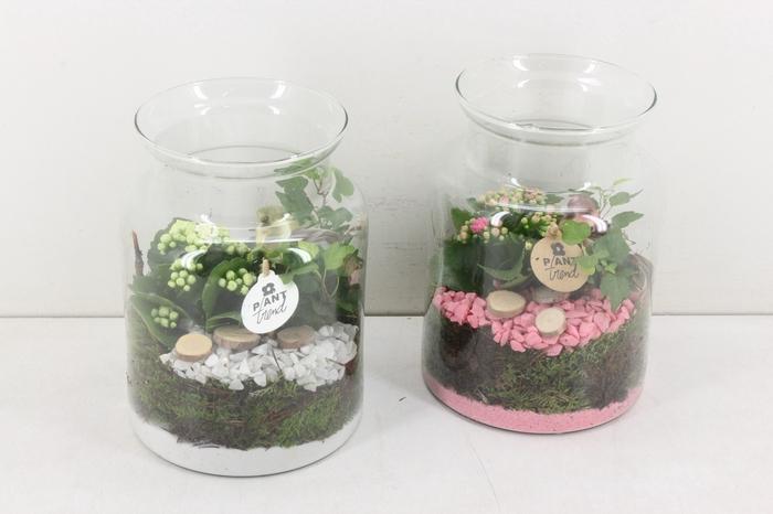 <h4>arr. PL - Glas bose XL - roze/wit</h4>