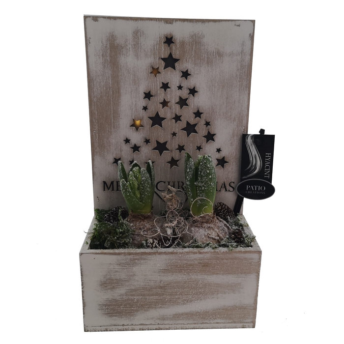 <h4>Arrangement Hyacint Kerstboom(2) met Led</h4>