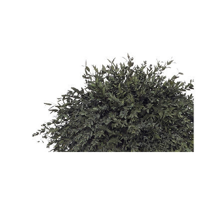 <h4>Eucalyptus Parvifolia Green</h4>