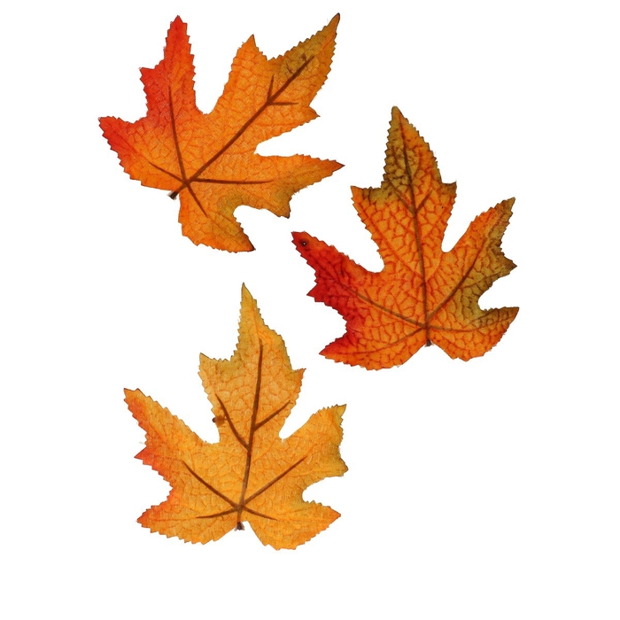 <h4>Autumn Leaf Maple 10cm x16</h4>