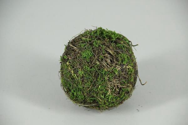 <h4>Ball Salim+moss 12cm</h4>