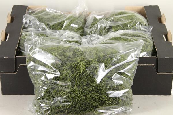 <h4>Moss Tillandsia Green 500gr</h4>