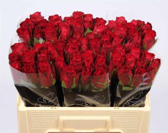 <h4>R GR MADAM RED</h4>