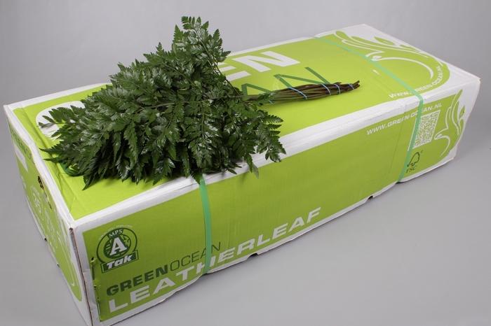 <h4>Ledervaren Extra Green Ocean</h4>