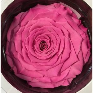 Rose stab. XXL Bic-08