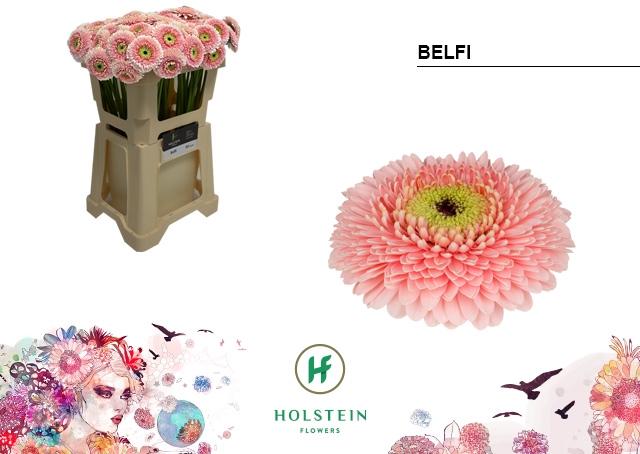 <h4>GE BV water Gerponi Belfi</h4>