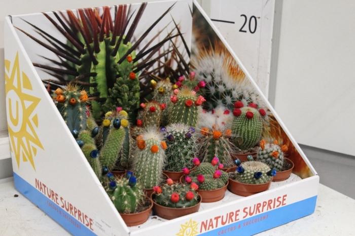 Cactus versierd