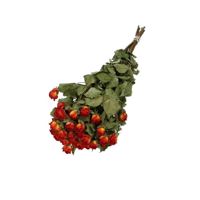 <h4>Droogbloem Roses Spray 40cm x10 50g</h4>