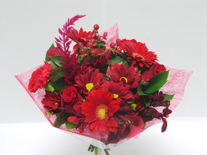 <h4>Bouquet Shorties Red</h4>