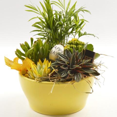 <h4>PTPB3903 Arrangementen planten in schaal</h4>