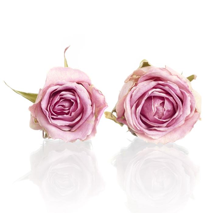 <h4>Rose Wham pink 4,5-5cm</h4>