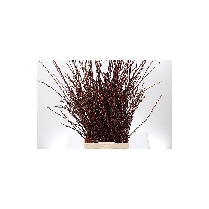 <h4>Salix Ov Per Bos</h4>