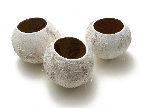 <h4>Dried articles Coco cup x5</h4>
