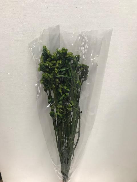 Statice on stem 60gr groen