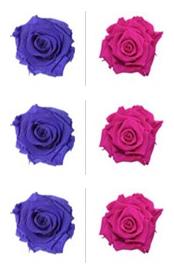 <h4>R Gr Prsv Violet Wine - Hot Pink</h4>