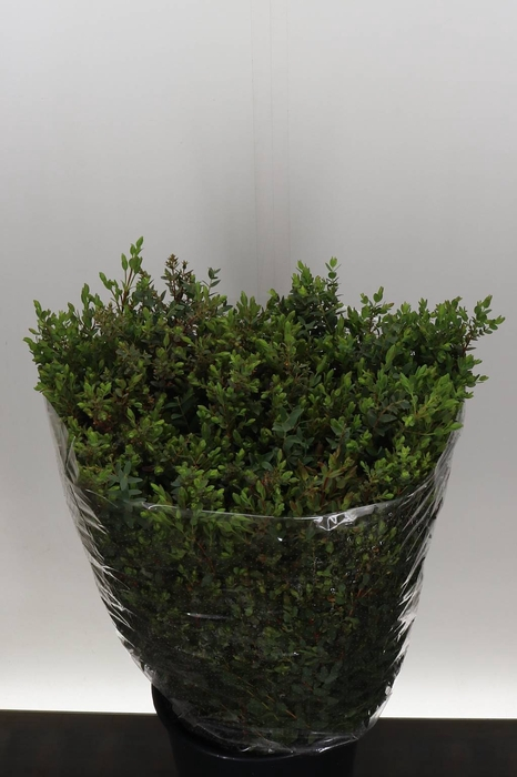 <h4>Eucalyptus Parvi 400gr. (P. Bos)</h4>