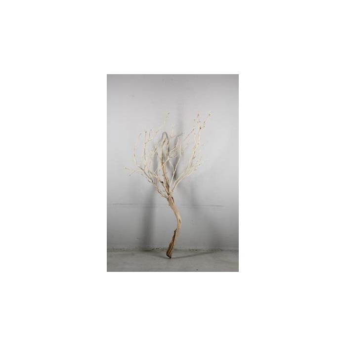 <h4>Manzanita Sandblasted 150cm</h4>