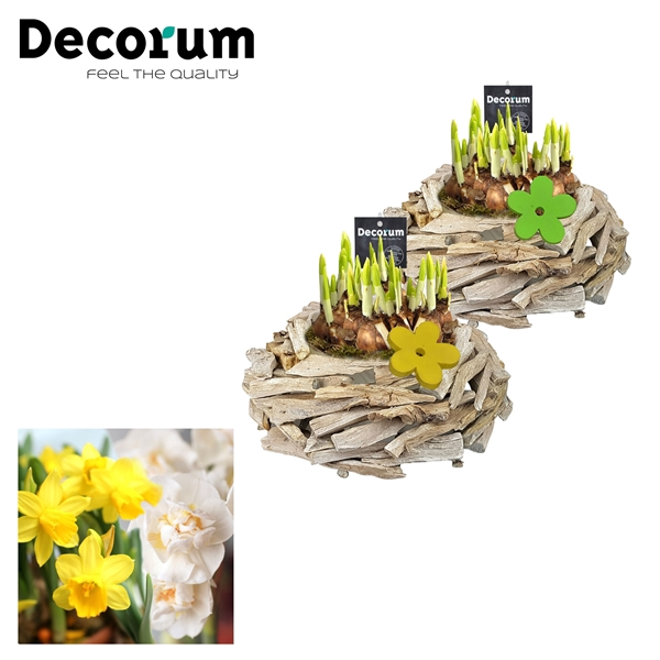 <h4>Narcis Hout Schaal HL17783N</h4>
