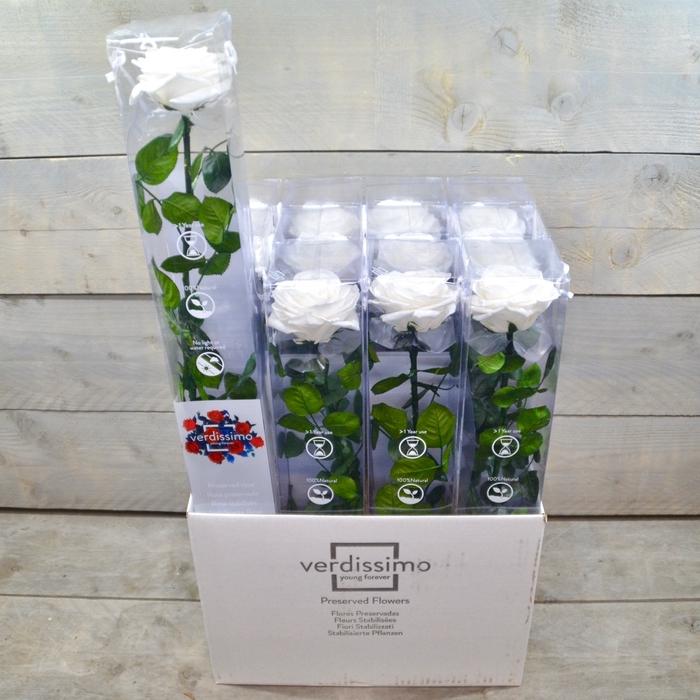 <h4>R PR Amorosa Premium White</h4>