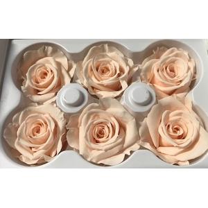 Roos Ines Almond Cream