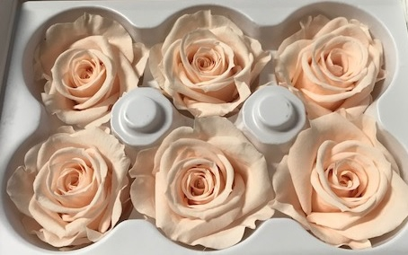 <h4>Roos Ines Almond Cream</h4>