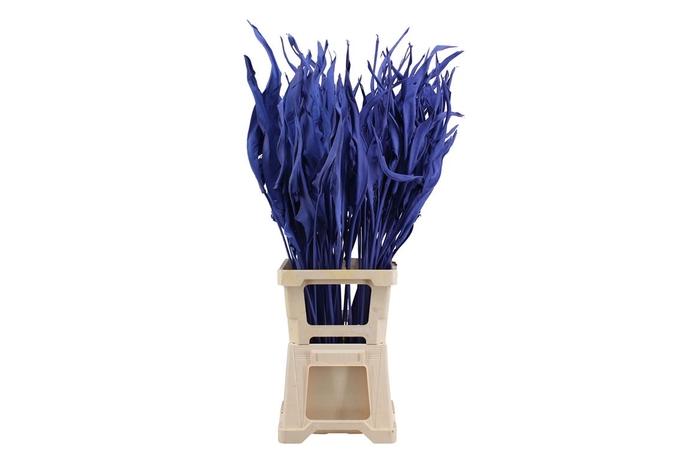 <h4>Strelitzia Blue</h4>