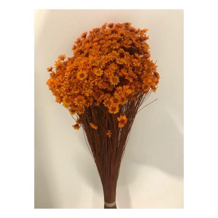 <h4>Glixia oranje 50cm 50gr</h4>
