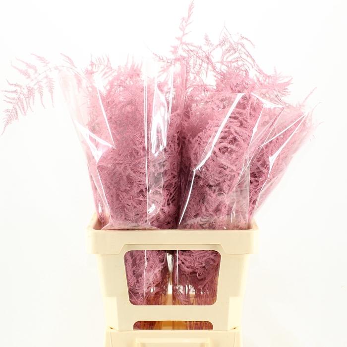 <h4>65cm Extra V. Pink</h4>