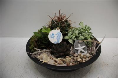 <h4>8529 Zink Black Cactus</h4>