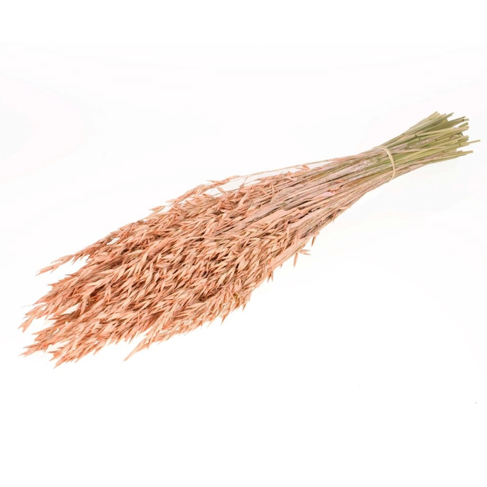 <h4>DRIED FLOWERS - HAVER (AVENA) CORAL MISTY</h4>