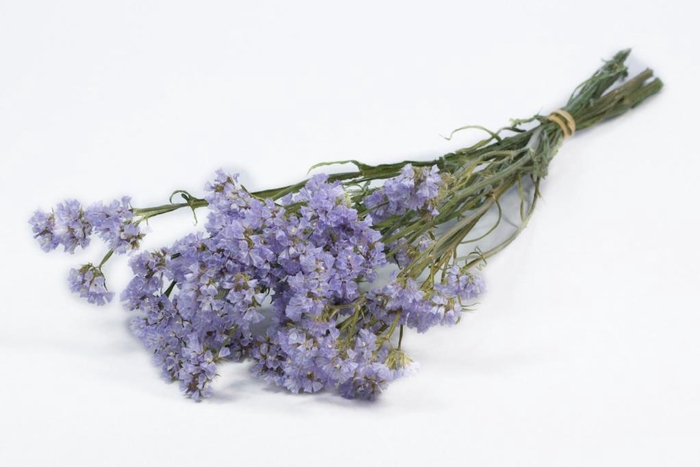 Statice sinuata lilac natural
