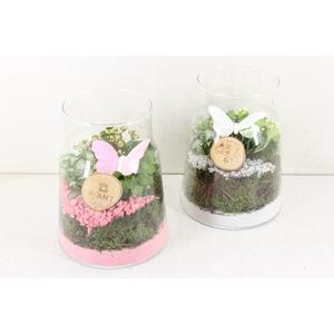 arr. PL - Glas vaas hoog - roze/wit