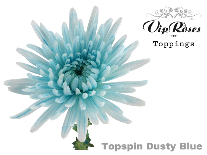 <h4>CHR G TOPSPIN DUSTY BLUE</h4>