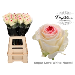 R GR SUGAR LOVE WHITE NAOMI