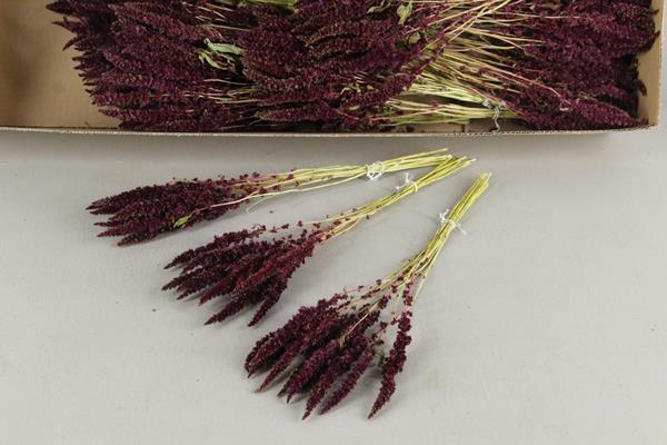 <h4>Df Amaranthus Red 18gr Bs</h4>